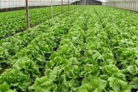 オーガニック野菜の農場
